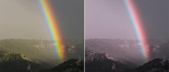 Как видят дальтоники - какие цвета, фото