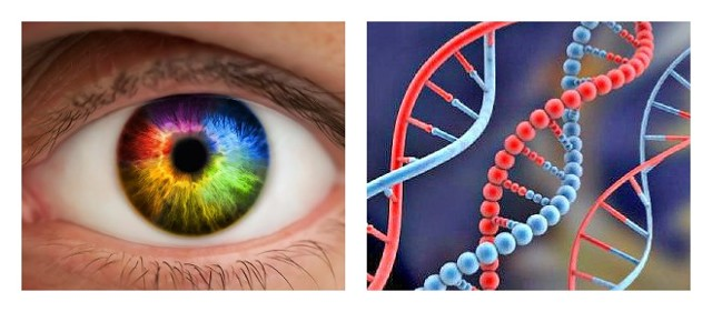 От чего зависит цвет глаз - голубые, зеленые, карие, серые