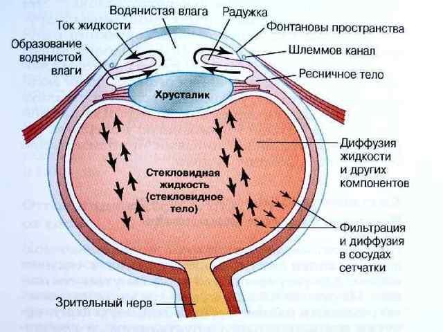 Пилокарпин капли глазные - инструкция, цена, отзывы