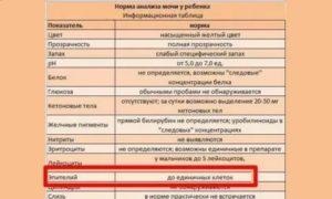 Эпителий в моче у ребенка – сигнал патологии в органах мочевыводящей системы