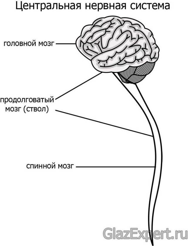 Вертикальный нистагм - причины, лечение, профилактика