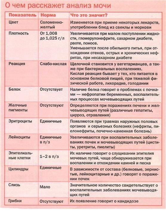 Изменения в моче при гломерулонефрите – показатели общего и дополнительных анализов